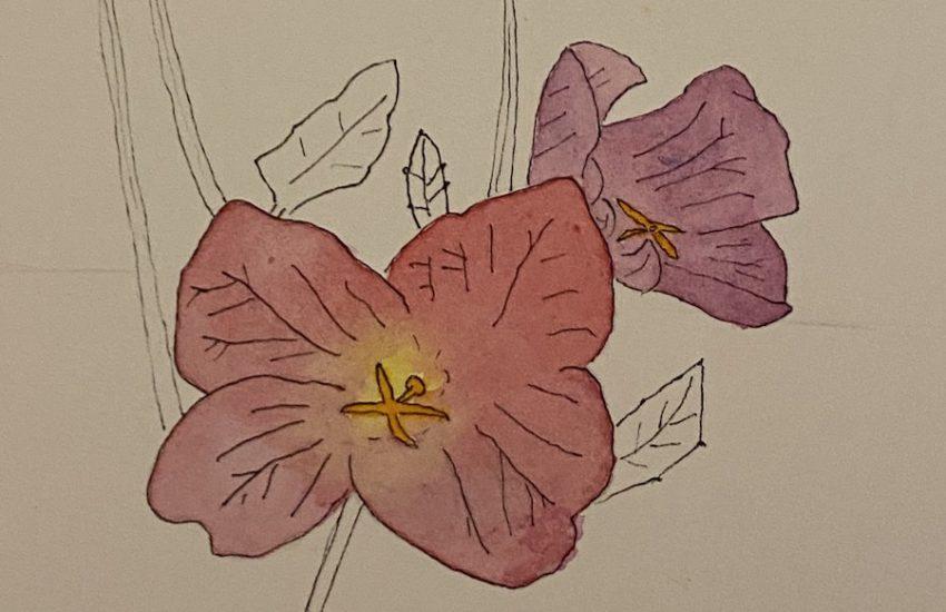 flowers in progress