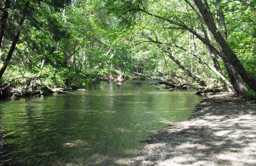 a river in Chico, California